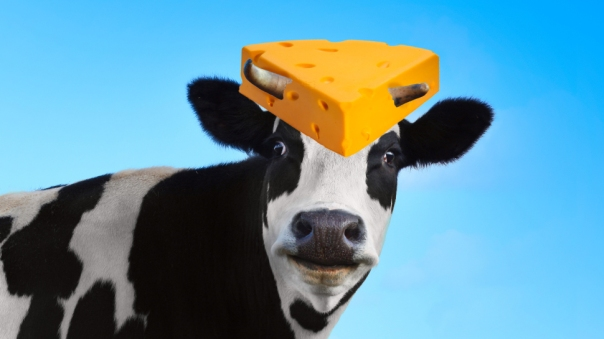 dairycow